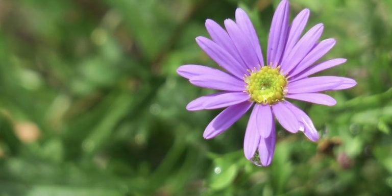 Jaké bylinky sbírat v září?
